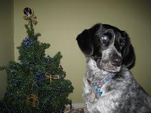 Bosco at Christmas
