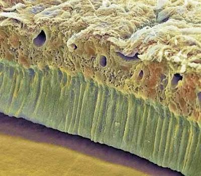 partes del microscopio. cuerpo humano distintas partes