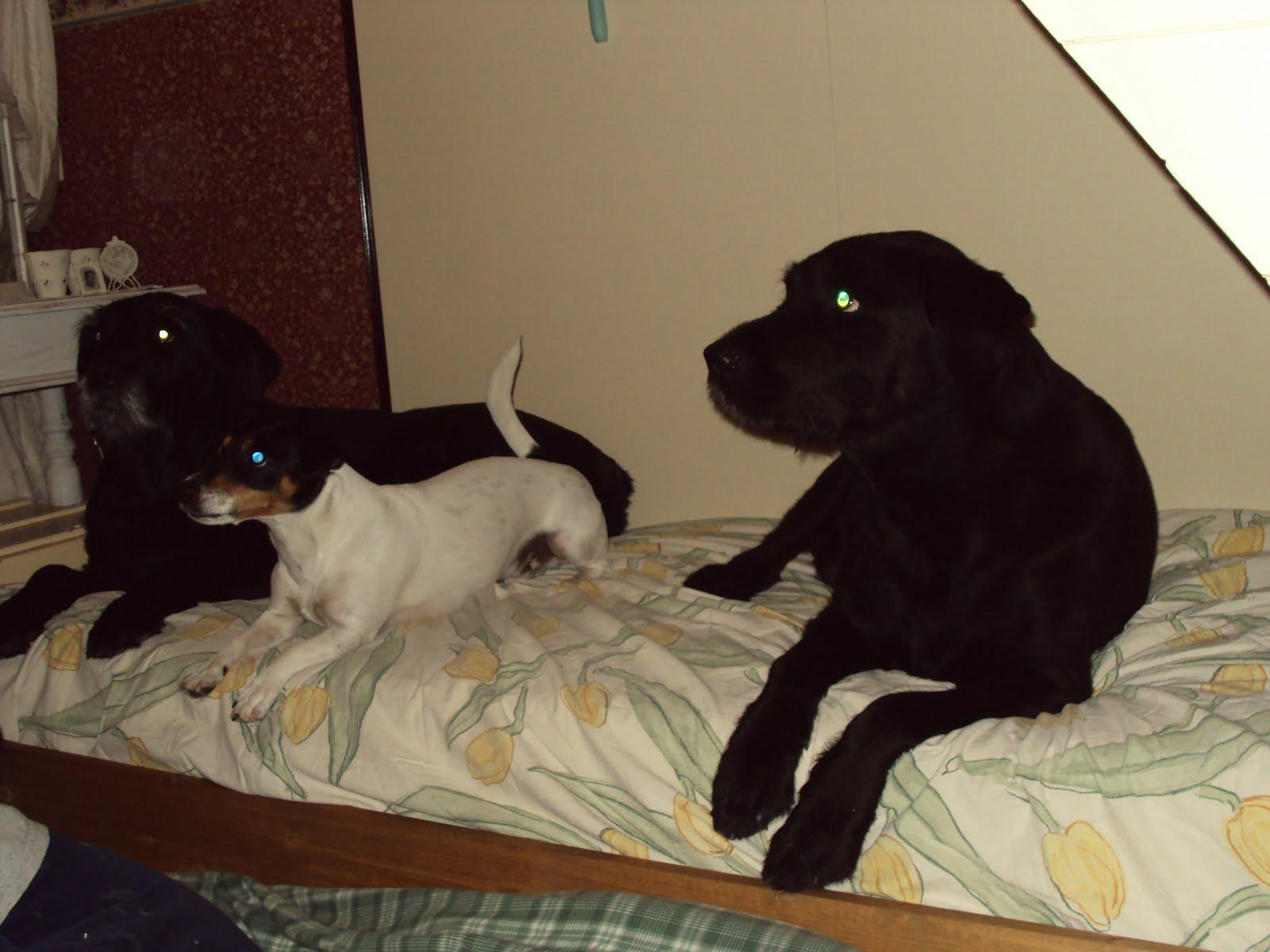 Een Honden Leven ................