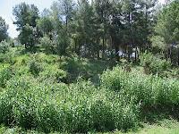La vegetació al cap de 2 mesos ha crescut molt.Juny 2010.