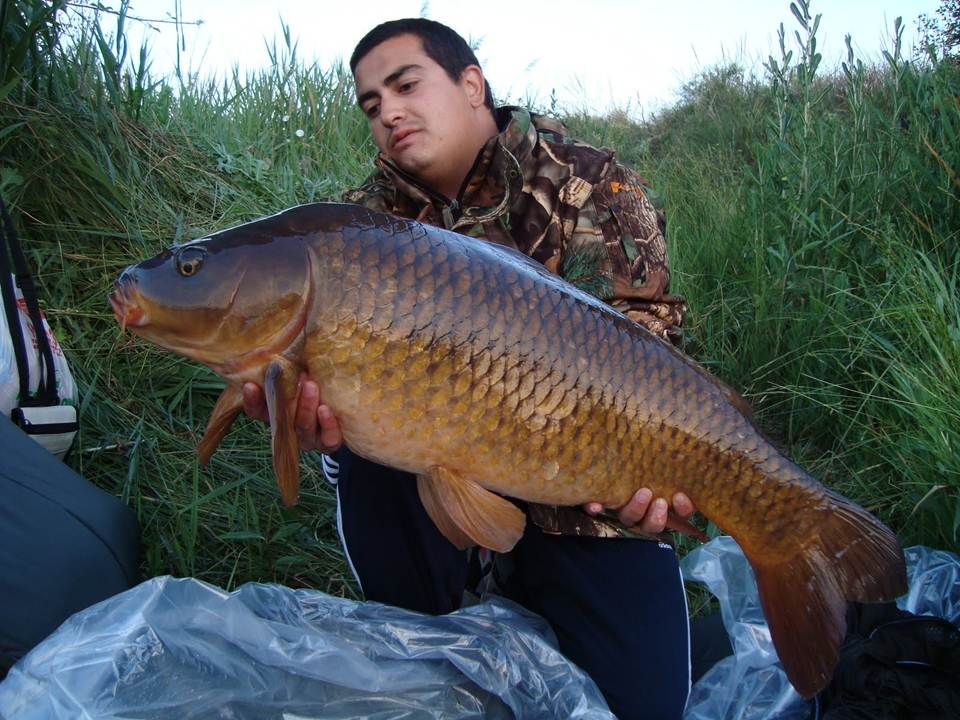 Ultimate carper carpas de grandes rios espanhois for Carpa de rio