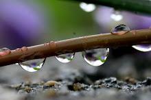 O beijo da chuva