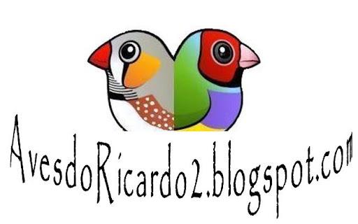 Aves do Ricardo