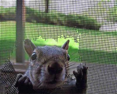http://4.bp.blogspot.com/_f98opUNuVXc/S8H6T22tXdI/AAAAAAAAOrk/66HlMSqH-Lc/s400/Squirrel.jpg