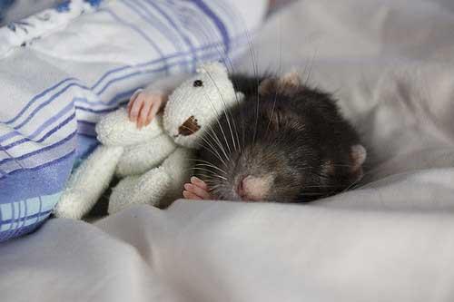 ネズミ 13