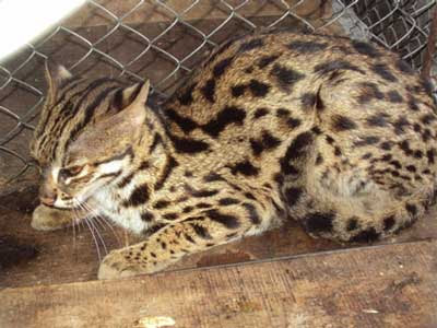 View-fishing cat kittens are
