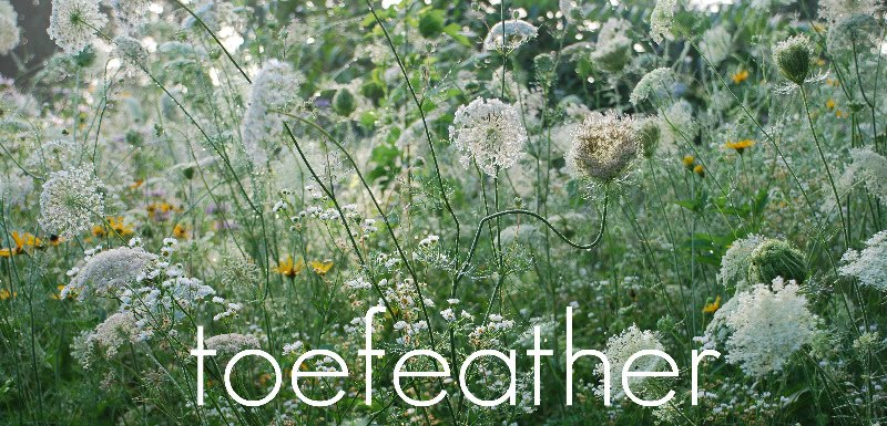 toefeather