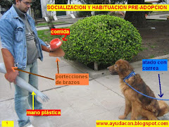 Socializacion humano-animal