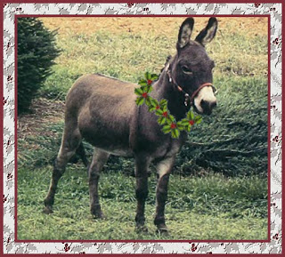 holiday fun dominick the donkey
