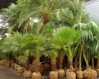 plantas bonitas