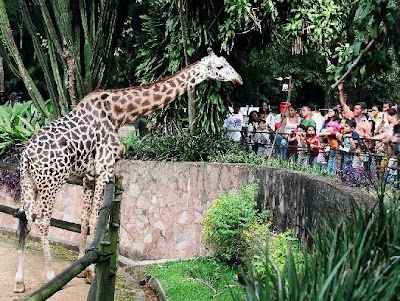 zoologico sp