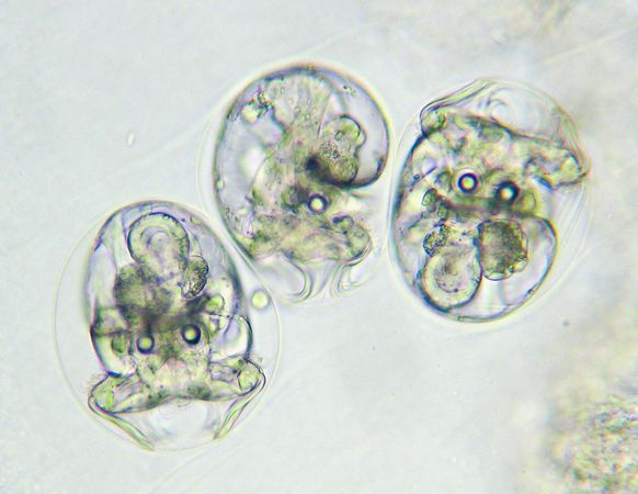 blue sea slug. Photos: Fiery Sea Slug