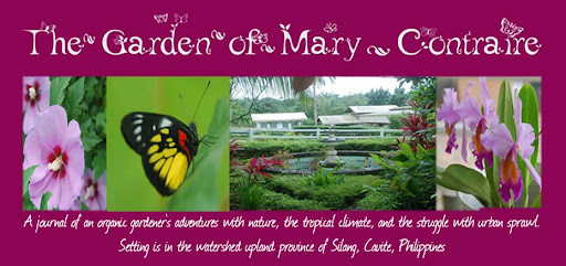 A Diary of an Organic Gardener in the Philippines