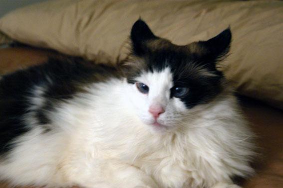 SUSAN´S CATS ... (or ... CATS´s SUSAN?)