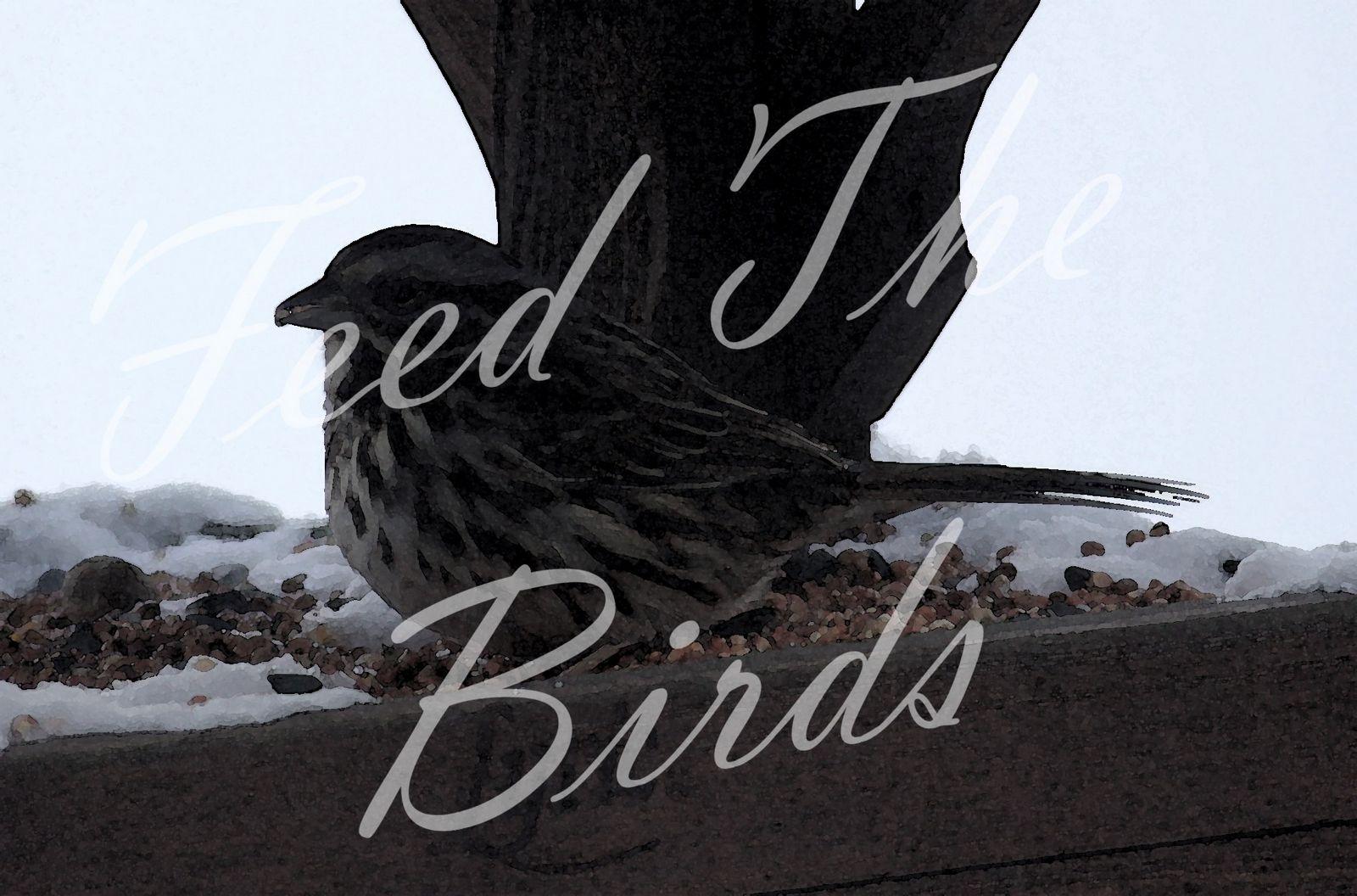 feed the birds stonegable