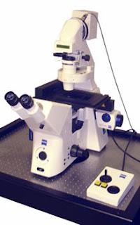 microscopio online