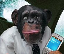 videomessaggio scimmia