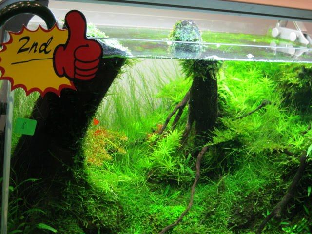 Freshwater aquarium fish malaysia the freshwater for Ornamental fish tank