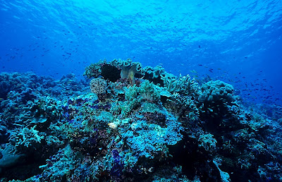 Coral reef scene, Sipadan, Malaysia