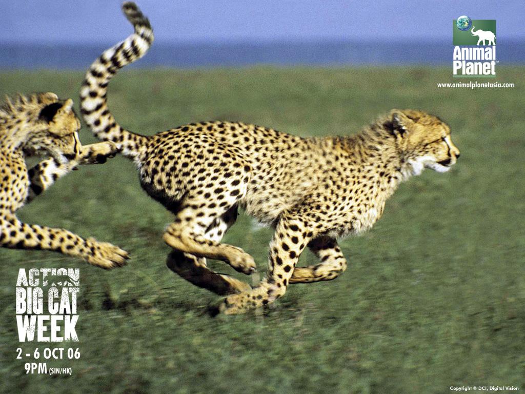 Imágenes de Animales Imagenes Bonitas De Amor  - descargar fotos de animales