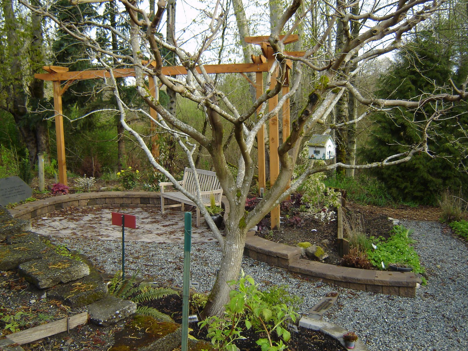 Natural Perspectives: Garden #1: Bellevue Demo Garden