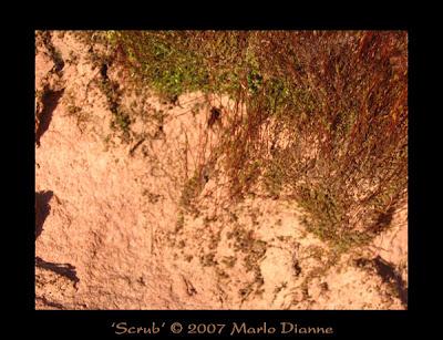 Marlo-Dianne-Scrub-0030-04-06-07