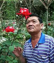 A thing of beauty: Chai admiring one of the many types of roses grown at his centre in Kea Farm, Cameron Highlands recently.