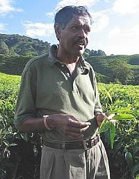 Passion for tea: Achuttan Kunjambi, 58, estate manager of Sungei Palas Tea Garden in Cameron Highlands.