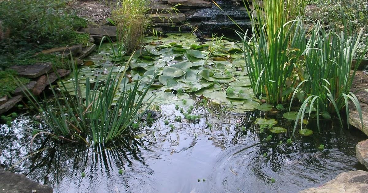 Garden thyme with the creative gardener ideas for garden for Prefab waterfalls for ponds
