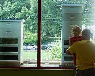 Indoor Observation Bee Hive