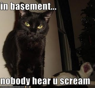 funny pictures basement cat makes another cat