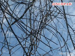 Jinghpaw