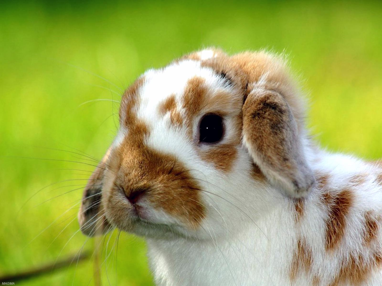 Cute Baby Animals Rabbits