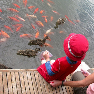 Boy Feeding Goldfish In Pond
