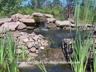 One of my brother's pond pictures which is a nice looking waterfall. His pond is filtered with elodea and parrot feather which helps keep his water healthy and clean. Water plants is the best form of filtration a pond can have.