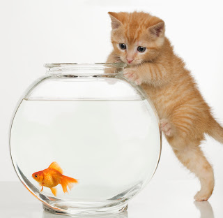 Cats Eat Goldfish!Cover Your Goldfish Bowl or Tank
