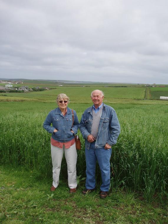 Barley Field in Orkney
