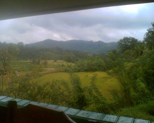 Pemandangan indah sawah padi di Payakumbuh, Sumatera barat