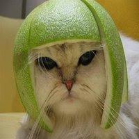 Cool Cat, Helmet Style