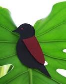 Robin- Red & Black
