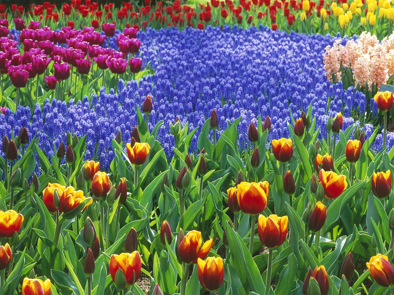 http://4.bp.blogspot.com/_fYn8ChSBXuw/TK90CSWZhXI/AAAAAAAABeM/fSbC2sqvuOY/s1600/Flower%20Garden%204.jpg