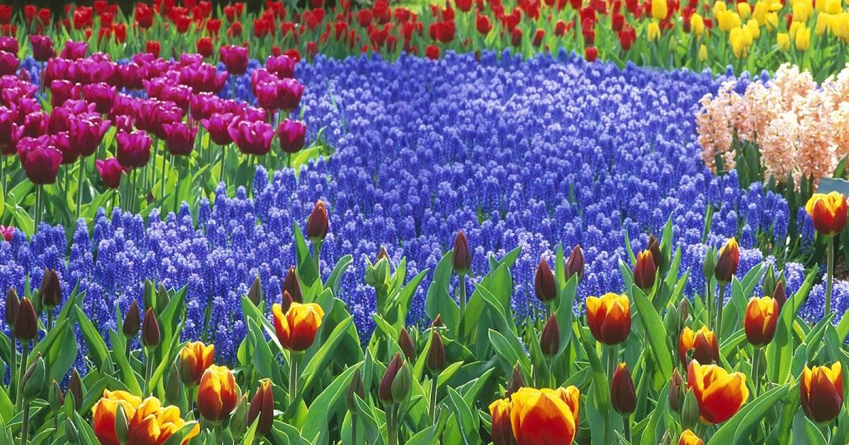 Start Backyard Flower Garden :  com Blog 5 Simple Steps to Start a Flower Garden