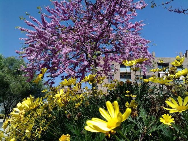 Sant Feliu DE Llobregat (Barna)