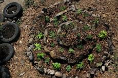 Espiral de hierbas