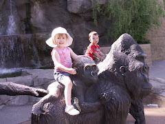 Gorilla time