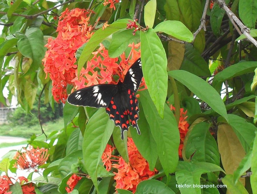 Macro fotografía de las alas de la mariposa son fascinantemente hermosa | Salón SLR