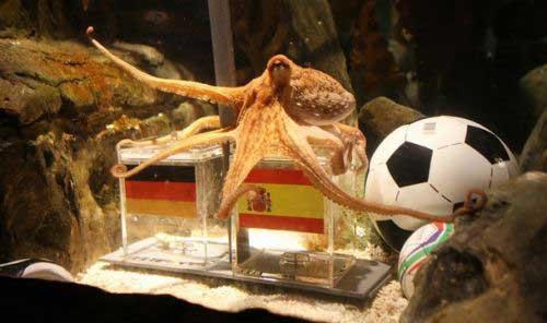 ramalan gurita paul belanda vs spanyol