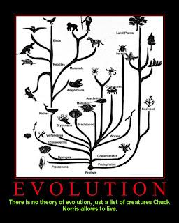 chuck norris evolucion