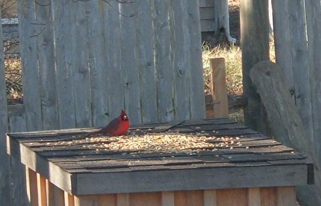 [Cardinal+Feeds.jpg]