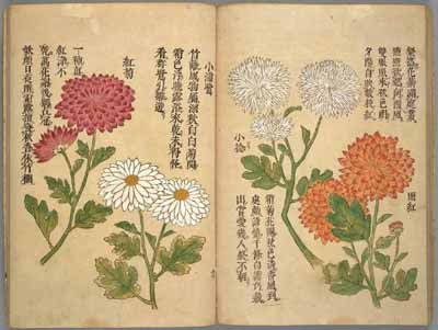 Chrysanthemum Book